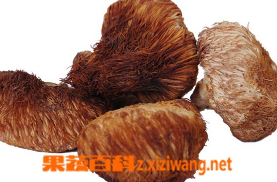 果蔬百科野生猴头菇